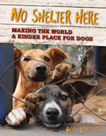 No_Shelter_Here